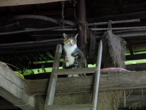 晴れのち雨 4:猫補給_a0180681_2318159.jpg