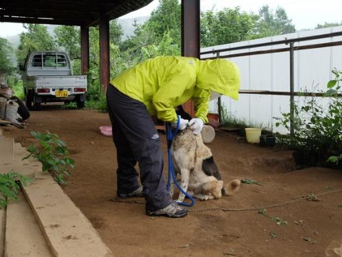 晴れのち雨 4:猫補給_a0180681_23215466.jpg