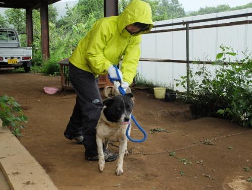 晴れのち雨 4:猫補給_a0180681_2324116.jpg