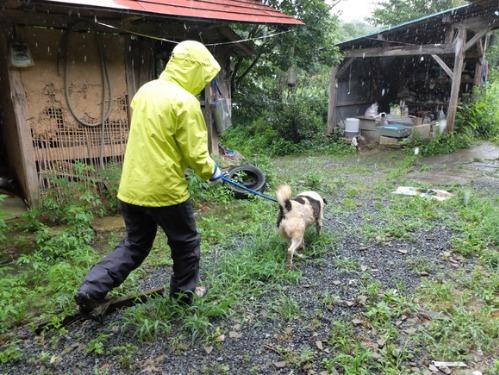 晴れのち雨 4:猫補給_a0180681_23244645.jpg