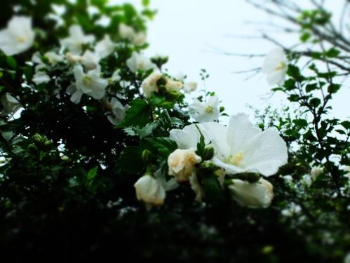 晴れのち雨 4:猫補給_a0180681_23281736.jpg