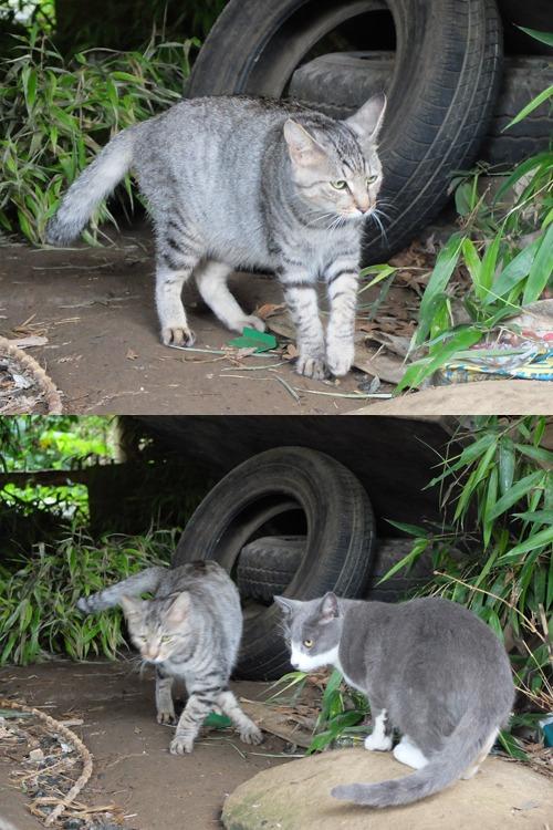 晴れのち雨 4:猫補給_a0180681_2328354.jpg