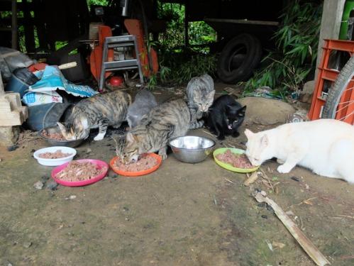 晴れのち雨 4:猫補給_a0180681_2330659.jpg