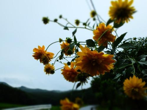 晴れのち雨 5:花束_a0180681_23391922.jpg