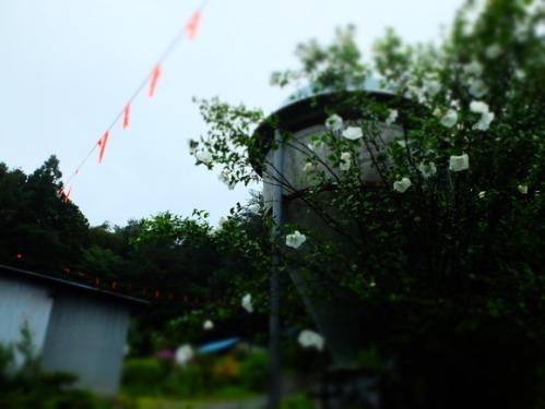 晴れのち雨 5:花束_a0180681_23503037.jpg