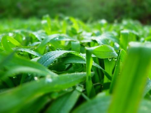 晴れのち雨 1:ジョセン地帯_a0180681_317058.jpg