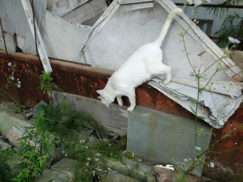 晴れのち雨 2:猫不足_a0180681_3473057.jpg