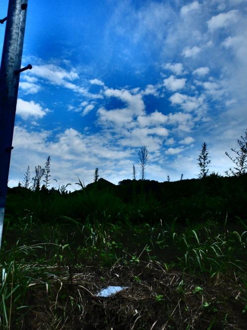 晴れのち雨 2:猫不足_a0180681_3564590.jpg