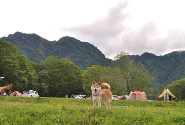 戸隠キャンプ2014② れんげちゃん_a0126590_05024585.jpg