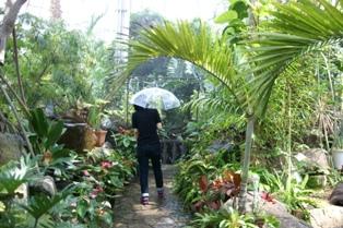 大学生が書く、大温室の大雨スコール体験!_f0203094_11564957.jpg