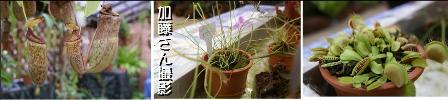大学生が書く、大温室の大雨スコール体験!_f0203094_121518.jpg
