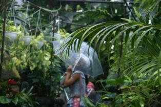 大学生が書く、大温室の大雨スコール体験!_f0203094_1443296.jpg