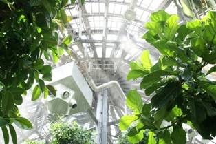 大学生が書く、大温室の大雨スコール体験!_f0203094_15453455.jpg