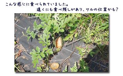 ブルーベリーの収穫_c0051105_23431654.jpg