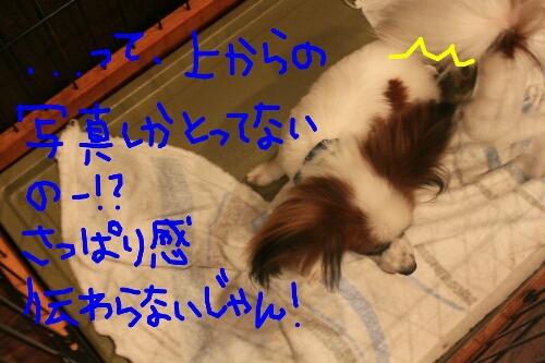 b0130018_23384071.jpg