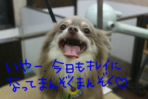 b0130018_2340369.jpg