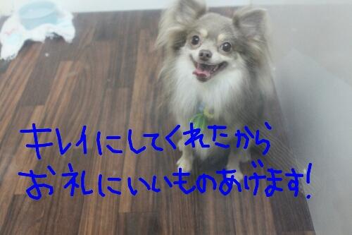 b0130018_23412398.jpg