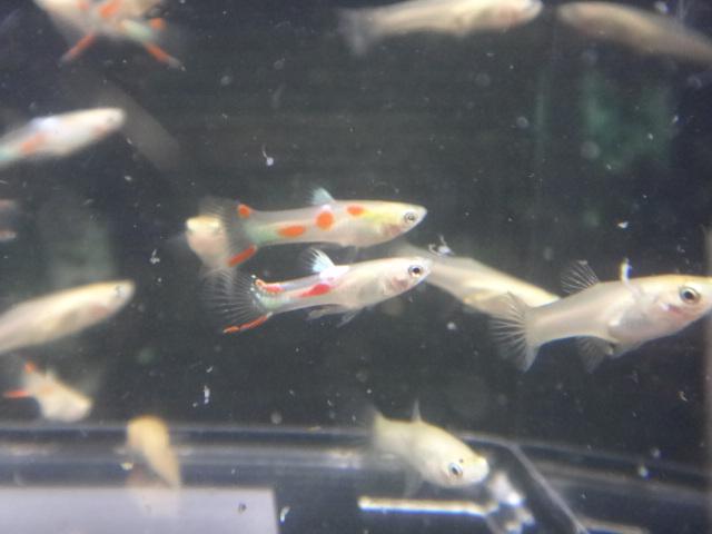 140814 熱帯魚・水草_f0189122_12551017.jpg