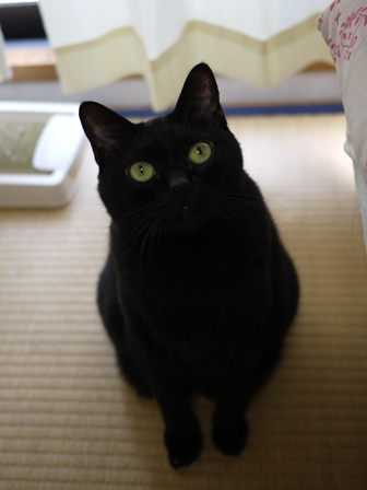 猫のお友だち カーンちゃんイナちゃん編。_a0143140_20212530.jpg