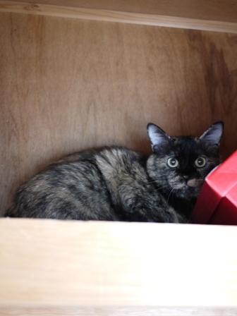 猫のお友だち カーンちゃんイナちゃん編。_a0143140_20215444.jpg