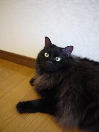 猫のお友だち モコちゃん編。_a0143140_2031488.jpg