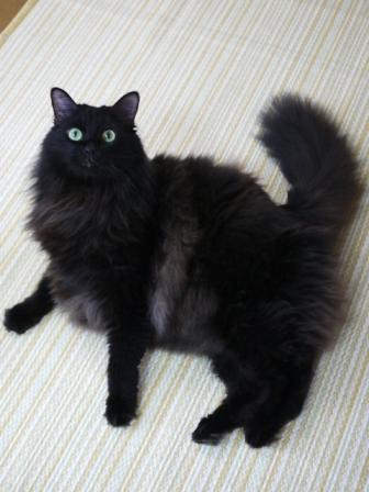 猫のお友だち モコちゃん編。_a0143140_20332077.jpg