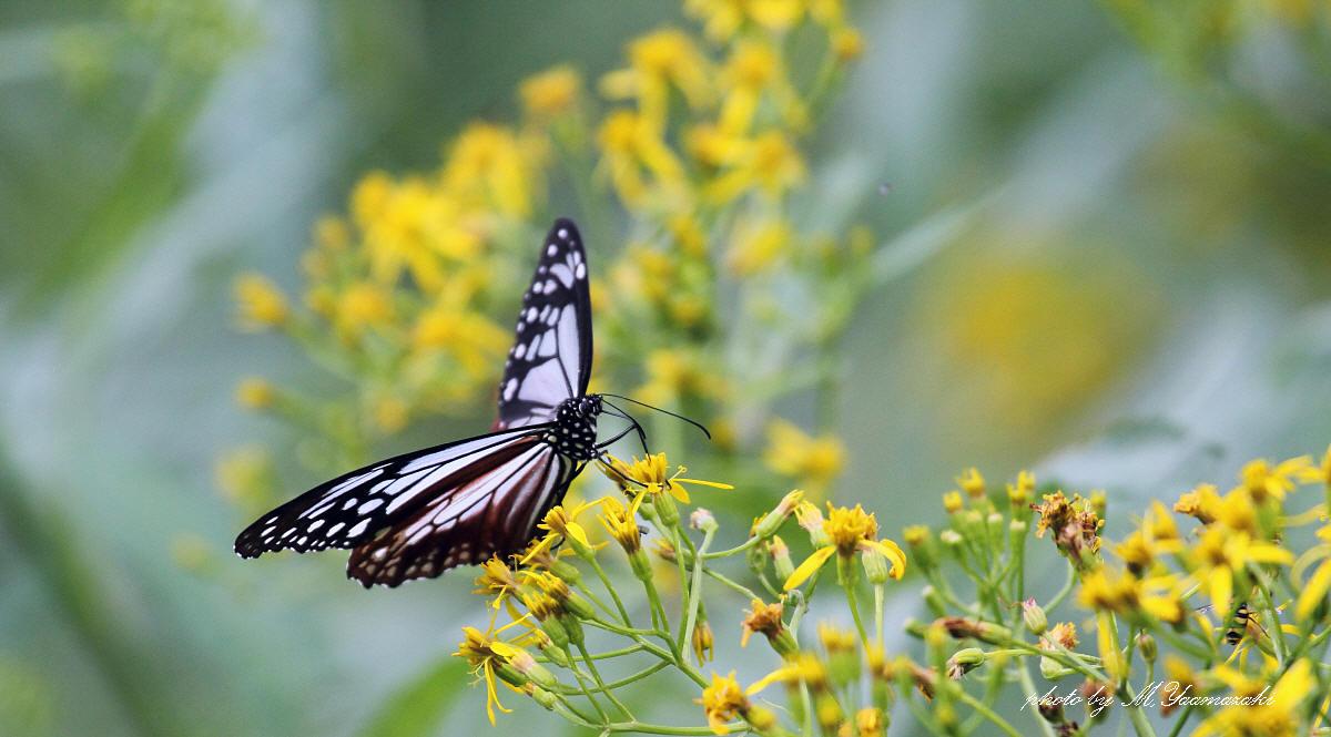 花と蝶と鳥と_c0217255_16495813.jpg