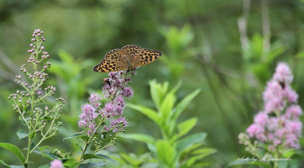 花と蝶と鳥と_c0217255_16504299.jpg