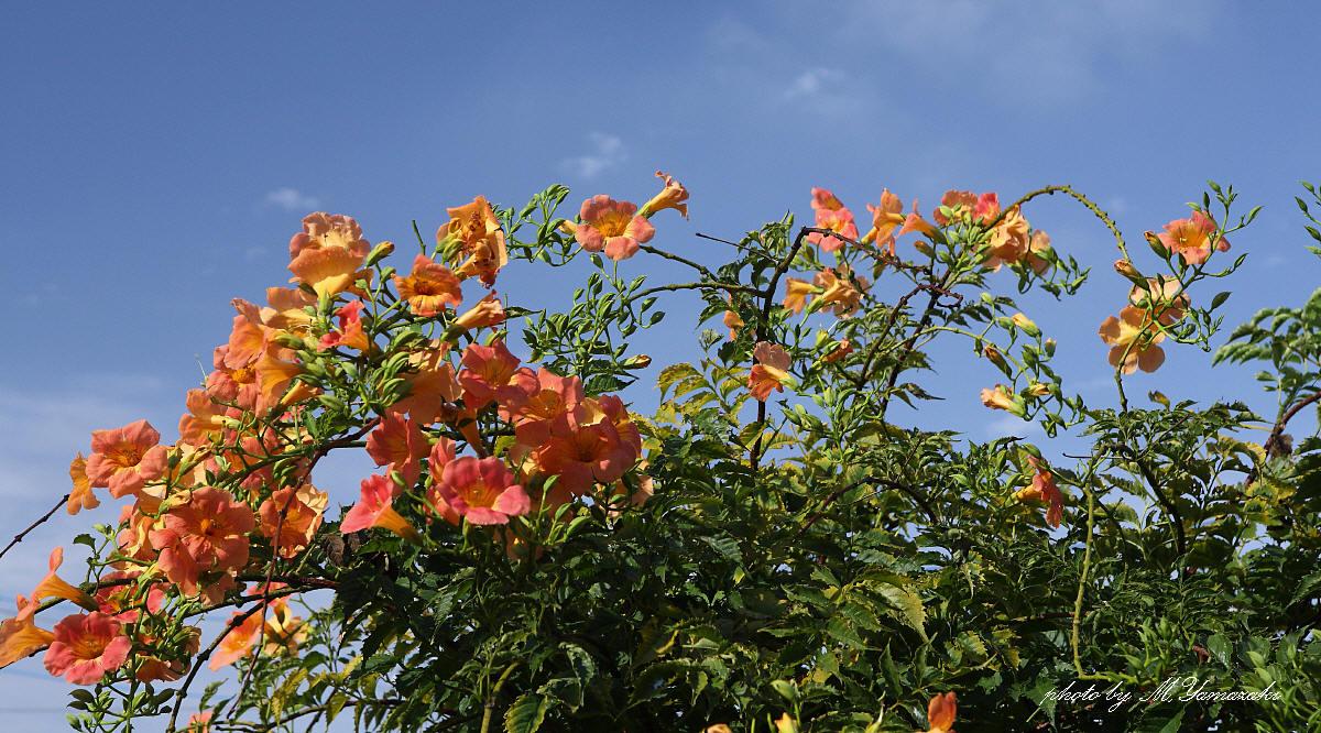 花と蝶と鳥と_c0217255_1652666.jpg