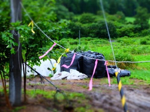 晴れのち雨 6:消えゆく庭_a0180681_0284827.jpg