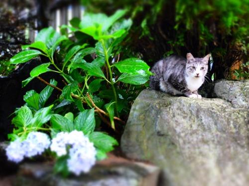 晴れのち雨 6:消えゆく庭_a0180681_0325956.jpg
