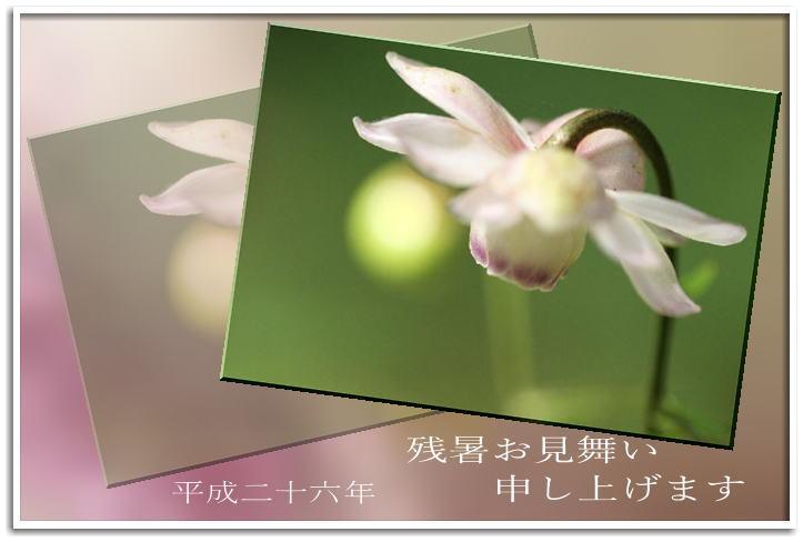 f0164592_8561220.jpg