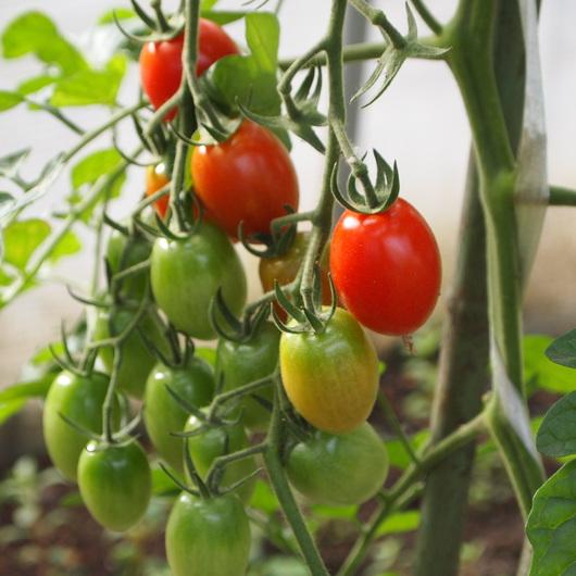 今年の家庭菜園の様子①_a0292194_18225795.jpg