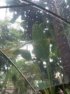 大学生が書く、大温室の大雨スコール体験!_f0203094_15523251.jpg