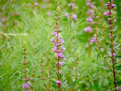 精霊花と、平和への願い_c0098807_17295674.jpg