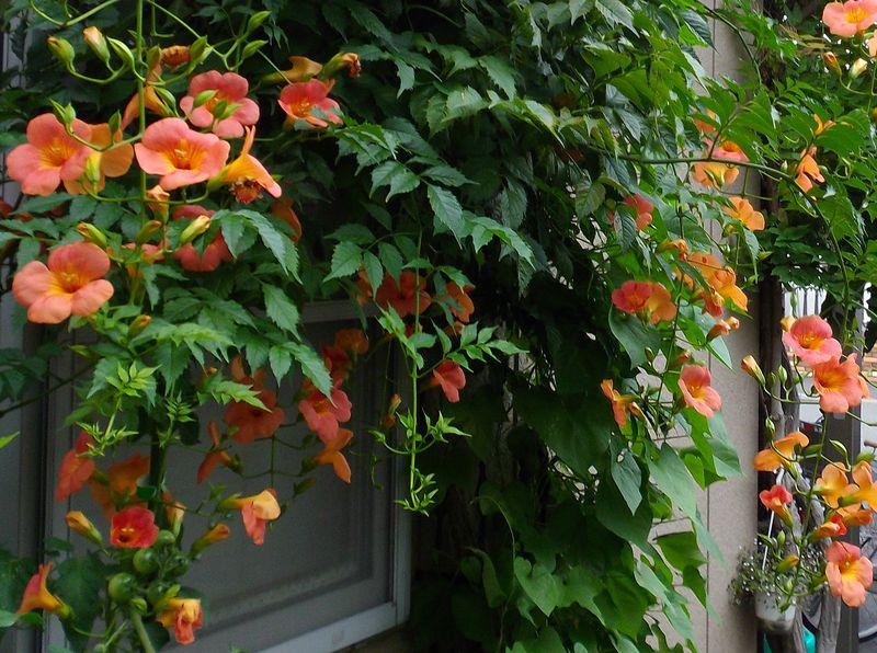 暦どおりに秋が来た_c0025115_1904024.jpg