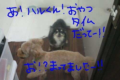 b0130018_0243279.jpg