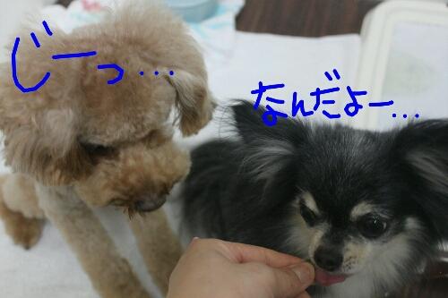 b0130018_0245592.jpg