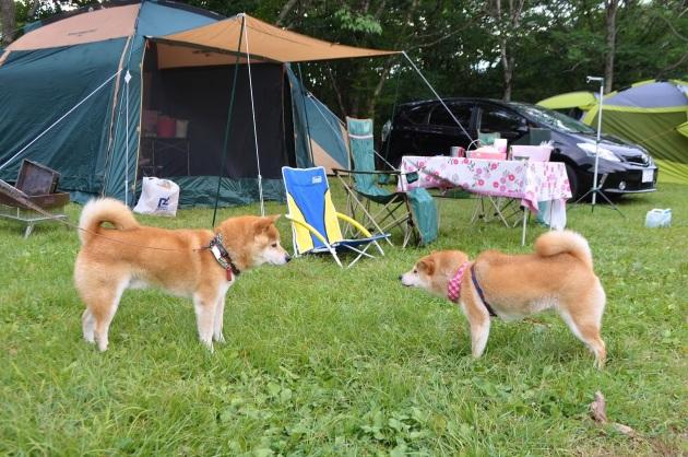 戸隠キャンプ2014④ コタさんがキター!_a0126590_00183466.jpg