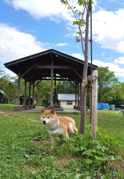 戸隠キャンプ2014④ コタさんがキター!_a0126590_00215134.jpg