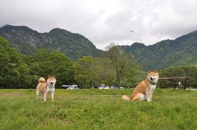 戸隠キャンプ2014④ コタさんがキター!_a0126590_00221213.jpg