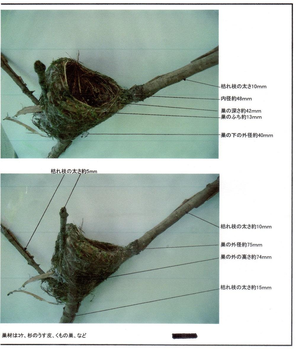 サンコウチョウの巣、小さい、_f0305401_7555846.jpg
