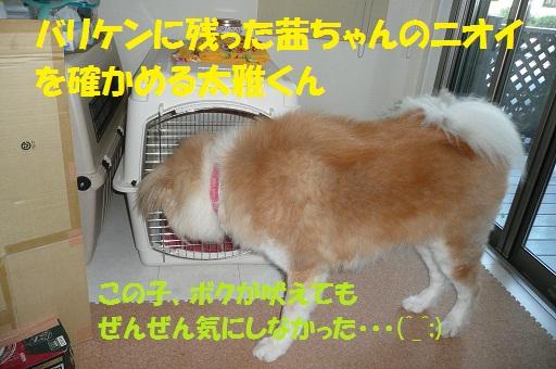 f0121712_12542121.jpg
