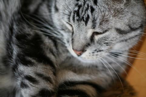 ちゃんと寝ても・・・眠い。~あり得ない眠さ(-_-)~_b0298740_10075033.jpg