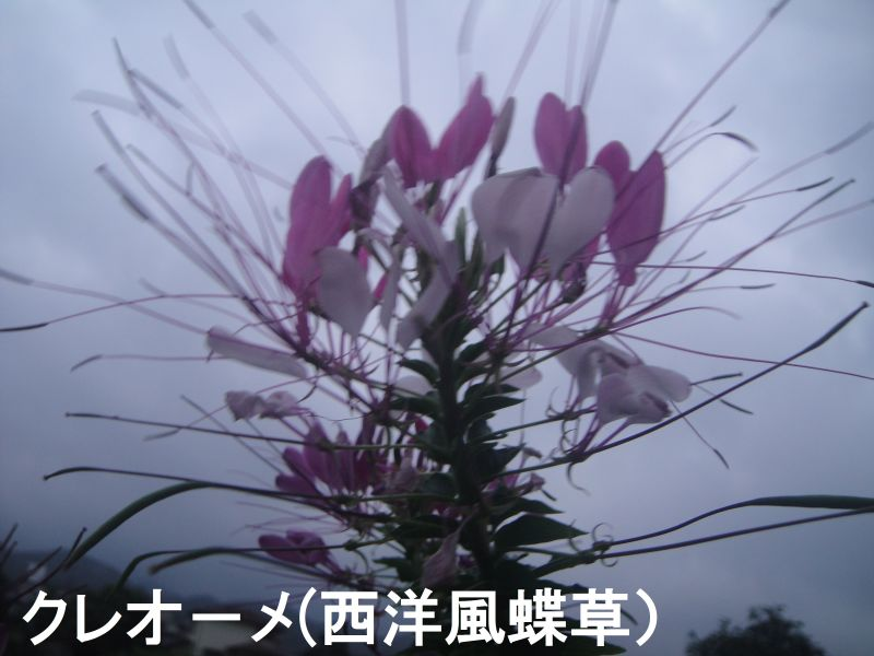 c0108460_16160552.jpg