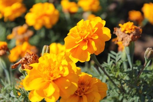 展望花畑 『四季彩の丘』_d0246960_23191582.jpg