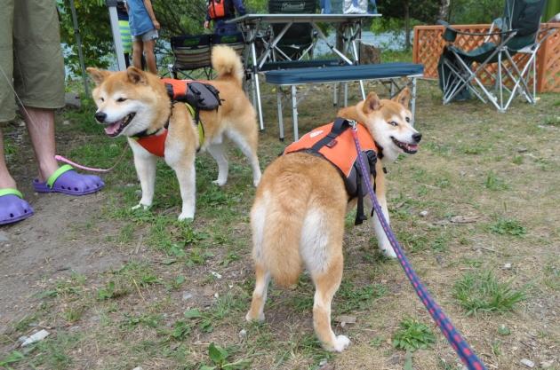 戸隠キャンプ2014⑤ 青木湖でカヤック_a0126590_07400011.jpg