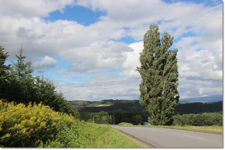 美瑛の丘と雲(8・13)_f0146493_1541999.jpg