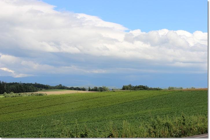 美瑛の丘と雲(8・13)_f0146493_1553471.jpg