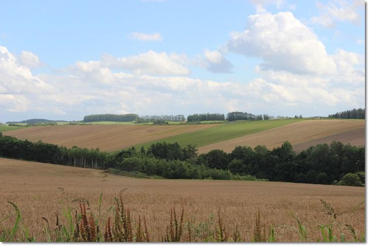 美瑛の丘と雲(8・13)_f0146493_1554337.jpg